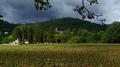 A little sunbeam ! (jo.misere) Tags: albas kerkhof zonnestraal sunbeam druiven grapes france frankrijk