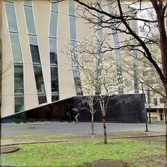 Le printemps avance comme un escargot.... (woltarise) Tags: floraison pluie université uqam bâtiment centreville montréal streetwise iphone7 hipstamatic