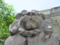 2019 Lion Under Shady Branches New York Public Library 8732 (Brechtbug) Tags: 2019 lions new york public library statues lion hanging shadows 42nd street 5th avenue nyc 05182019 may springtime soon spring weather eventually animal cat feline statue sculpture art cats ave st gargoyles gargoyle reclining repose resting facade stairs front entrance