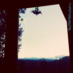 And then Papa & Mama Hummingbird brought their 3 little ones to their favorite local outdoor cafe for dessert.😊💥💛💥💫 #Hummingbird #Hummingbirds  #SpiritAnimal #SpiritBird #AnimalMedicine #Happiness #Joy #GreatFo (JeannieMarieBlaha) Tags: nature animalmedicine hummingbirds happiness outdoors hummingbird dumpingofftheold sunset greatfortune animalinterpreter spiritanimal joy angelcowgirl love medium colorado tastinglifessweetness jeanniemarieblaha spiritbird intuitive uncreatingthepast