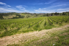 Grapes (szn_d) Tags: tuscany fields landscape grapes