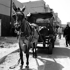 Marrakech 2019, 004 (haribote) Tags: planar tmax carlzeiss hasselblad cityscape 400tmy 503cw cf80mmf28 kodak マラケシュ マラケシュ=タンシフ モロッコ