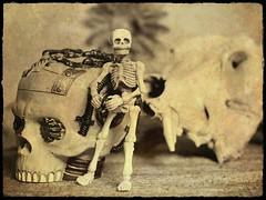 Still Life (DayBreak.Images) Tags: tabletop stilllife steampunk skull miniature skeleton flower canondslr meyeroptic trioplan ringlight photoscape bw sepia border home