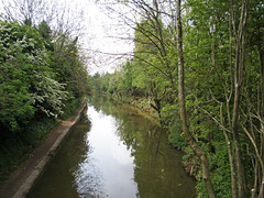Coventry's Other River: The Sowe: Bedworth to Longford Park: Grindle Road Woodshires Green: Coventry Canal. (amandabhslater) Tags: river sowe footpath coventry willow trees park canal