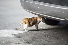 Looking back (jasoncremephotography) Tags: leica sl leicasl summilux 75mm feline cat