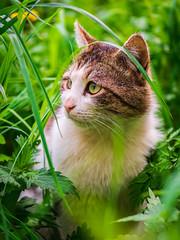 Cat (ruslan.rec) Tags: cat cats green colors panasonic gx80 lumix lumixrussia sigma sigma60mm коты зеленый россия нижнийновгород