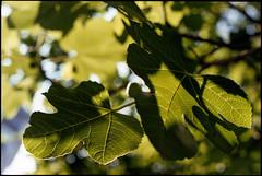 (nicolasmathieudosiere) Tags: film slr dynax vintagecamera 50mm 35mmcamera 24x36 135 outdoor nature trees leaves garden park ishootfilm