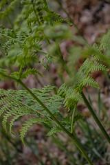 Flora silvestre 2 (lebeauserge.es) Tags: pinilladelvalle madrid sierra naturaleza macro flor planta