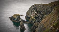 Wild life with rocks (Carl Terlak) Tags: