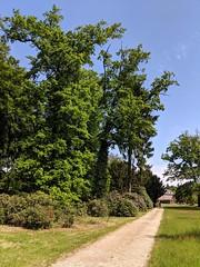 Schloss Wolfsgarten (chriechers) Tags: 2019 germany langen schlosswolfsgarten garden