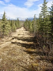 The Trail (neukomment) Tags: alaska road nabesnaroad mentastamountains mountains may 2019 spring wiiderness canoneosrebelt5i 18250mmf3563dcosmacrohsm sigmalens