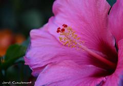 Jordi Casademont (jordicasademontperez) Tags: família flors jardí paisatges