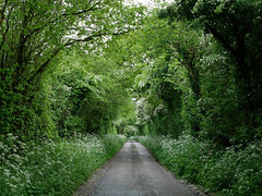 country lane 20/52 (auroradawn61) Tags: dorset countryside england uk green leaves trees flowers lumixgx80 rainy sunday woods explored interestingness 52weeksin2019