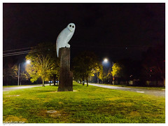 The Owl Statue on Monday morning (garydlum) Tags: owlstatue publicart
