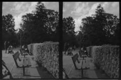 Battersea Park half-framed, London (cheekymoji) Tags: demihalf canondemi battersea london londonstreet halfframe homedeveloped blackandwhite ishootfilm