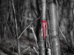 Ritaglio rosso (marchen65) Tags: alberi autunno bosco rosso