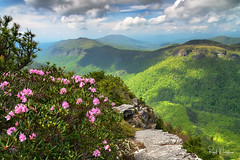 Linville Gorge from Hawksbill Mountain (Reid Northrup) Tags: rrs nature carolinarhododendrons clouds flower forest hawksbillmountain landscape linvillegorge nikon northcarolina reidnorthrup rhododendrons rocks rugged trees