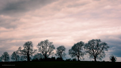 Pink sky (toniertl) Tags: chippingcampden cold cotswolds overcast spring toniphotoxoncouk silhouette trees painterly soft sunset gloucestershire pink clouds skyscape himmel