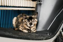 neko-neko2422 (kuro-gin) Tags: cat cats animal japan snap street straycat 猫 sigma dp2x