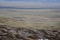 Top Dogtown Trail, Grasslands - DSC_3526a (Markus Derrer) Tags: topdogtown hikingtrail markusderrer saskatchewan grasslands grasslandsnationalpark landscape elk wapiti