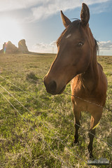 Here For the Scritches (kevin-palmer) Tags: may spring nebraska nikond750 bridgeport courthouseandjailrocks horses animals evening gold golden sunlight bluff rockformation clouds fence barbedwire tamron2470mmf28 backlit backlight