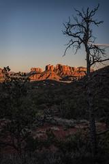 Sedona Sunset (MichellePhotos2) Tags: sunset goldenhour silouette tree sedona arizona redrock red rock sandstone nikon d850 nikond850 prime 35mm