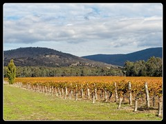 Wineries in the Pyrenees (wmikef) Tags: austrlia victoria pyrenees autumn vineyard winery