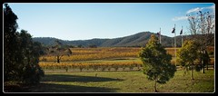 Wineries in the Pyrenees (wmikef) Tags: vineyard autumn australia victoria pyrenees winery