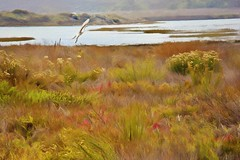 Morning Has Broken (Christina's World : On & Off) Tags: landscape lagoon egret flight painterly pastels warm colors grasses water scene gold san diego california creative colorful autumn bird bright scenic dramatic exotic flowers batiquitos carlsbad kurt peiser large light mood nature preserve outdoors plants textures topaz united states usa vegetation vivid exhibition talent exoticimage yellow 5415 7631 canon 6d 70200 l hss