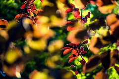 Foliage fiesta! (tonguedevil) Tags: outdoor outside countryside spring nature woodland trees leaves foliage colour light shadows sunlight fuji
