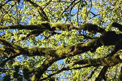 treehousepoint_28 (natashatakasato) Tags: washington treehousepoint forest moss ferns pnw sonya6000 wedding