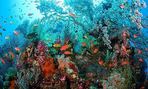 Tulamben Liberty Shipwreck