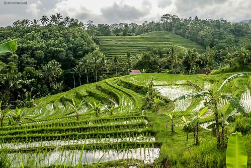 Bali rise terrace