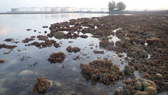 Living shores of Pulau Hantu (wildsingapore) Tags: pulau hantu island singapore marine coastal intertidal shore seashore marinelife nature wildlife underwater wildsingapore landscape