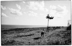 Argos sniffing Ulysse (yoannpupat) Tags: argentique bulgaria straydog noiretblanc konicaautos3 filmphotography kodak400trix filmisnotdead bw bnw blackandwhite analogic film 35mm