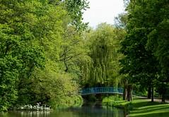 Bridge (dimitratrovas) Tags: nature bridges getoutstayout travel netherlands amsterdam park green peace