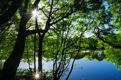 Sunny morning (prokhorov.victor) Tags: утро природа озеро пейзаж вода отражение солнце