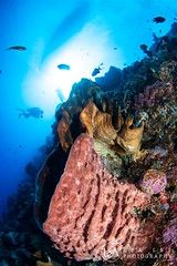 Diver, boat and reef (Lea's UW Photography) Tags: lealee canon5dmk3 subal canonef815mm fisheye wideangle bunaken underwater corals