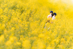 _DSC2666 (コギ~ィ) Tags: 長野県 阿南町 平石農場 菜の花 dollfiedream nikon d810 tamron fa90mm128macro