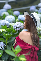 TOM09611 (HwaCheng Wang 王華政) Tags: hydrangea 人像 外拍 時裝 陽明山 繡球花 md model portraiture sony a7r3 ilce7rm3 a7r mark3 a9 ilce9 24 35 85 gm dress flower