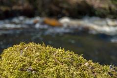 Outokumpu - Finland (Sami Niemeläinen (instagram: santtujns)) Tags: outokumpu suomi finland luonto nature särkisalmi outdoors pohjoiskarjala north carelia metsä forest kasvi