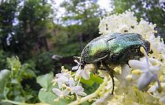 Bug (collectorib) Tags: bug fisheye macro