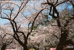 Snap photos taken with Classical film camera, Olympus Auto-Eye Ⅱ (junjunohaoha) Tags: olympus autoeye オートアイ オリンパス film フィルム saitama japan