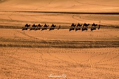 Mingsha Mountain in Dunhuang (敦煌鸣沙山) (susannang) Tags: mountain desert camel rides dry tracks team sand dune china dunhuang lines travel