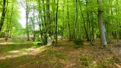 New Forest NP, Hampshire, UK (east med wanderer) Tags: england uk hampshire newforestnationalpark nationalpark forest woodland oak beech