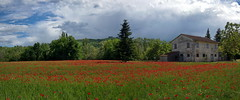 _IMG1366_panorama (polipao) Tags: campi field papaveri cielo sky nuvole clouds natura nature country relaxing quiet peace alberi trees montefeltro marche ilobsterit campagna casadicampagna countryhouse poppies