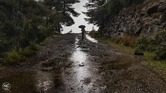 Rainy country road (nikhrist) Tags: rain road rainy woman umbrella forest country reflections hymettos mountain greece nickchristodoulou