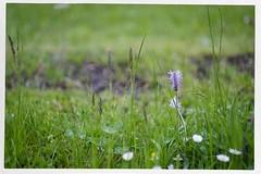 Shirley 1926-2019 R.I.P. 4 (John Teulon Ladd) Tags: schwarzwald shirley helios44m458mmf2 fujixt10 blackforest