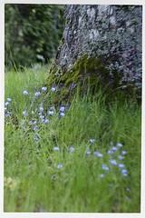 Shirley 1926-2019 R.I.P. 3 (John Teulon Ladd) Tags: schwarzwald shirley helios44m458mmf2 fujixt10 blackforest