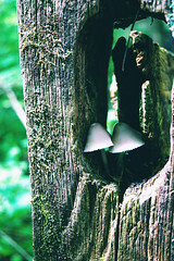 Twin Sisters (Preoccupine) Tags: mushrooms white fence close up forest woods nature outdoor slate run canal winchester ohio metro park